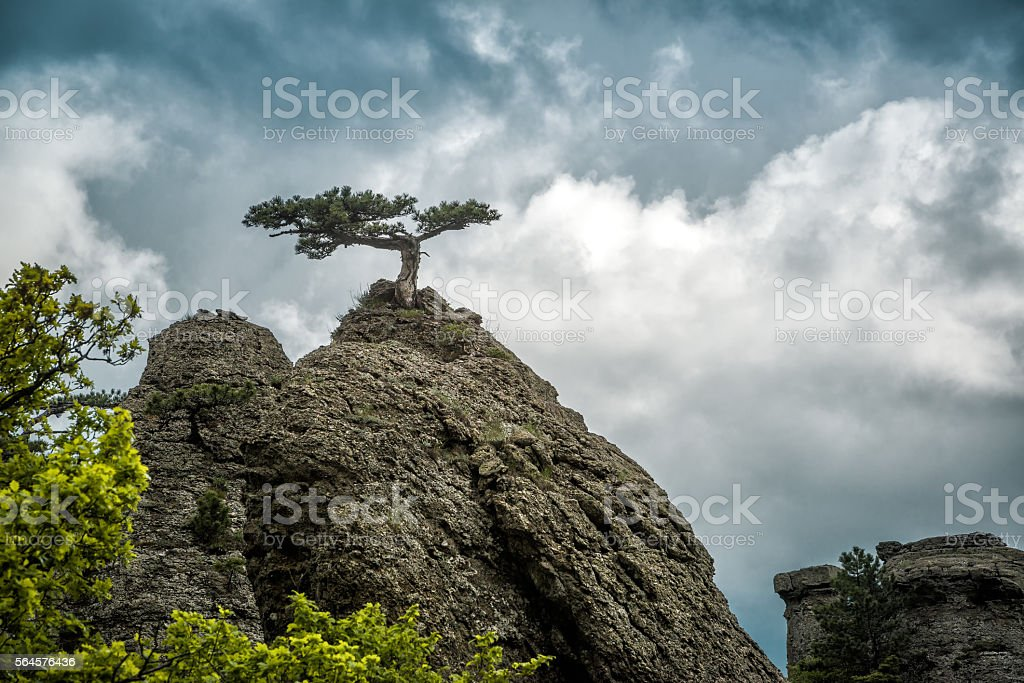 Lonely tree on a rock in the Demerdji mountain, Crimea stock photo