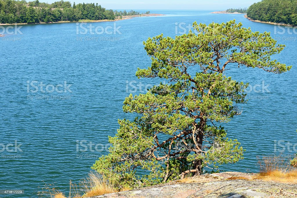 Lonely tree on a rock stock photo