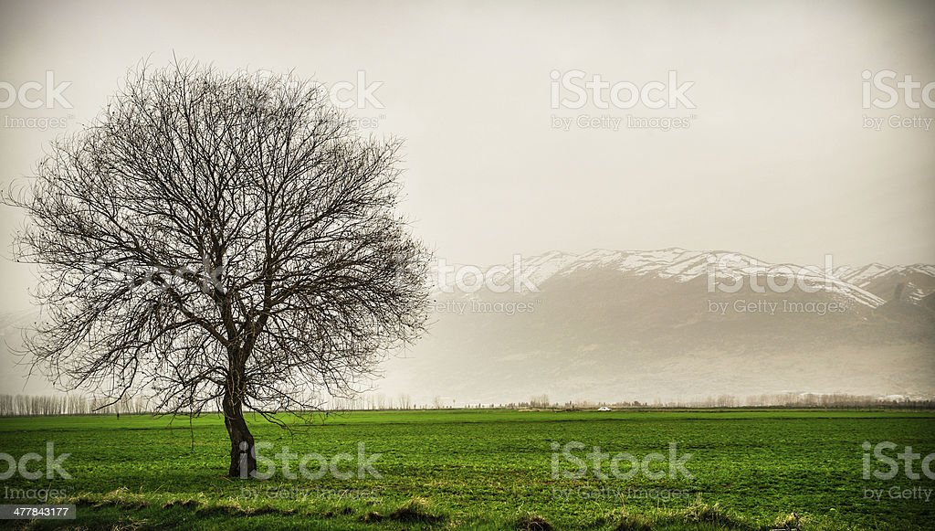 lonely tree on a winter day stock photo
