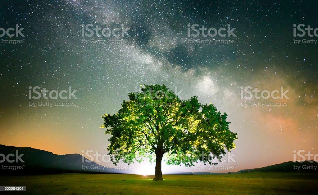 lonely tree on field under milky way galaxy, Dobrogea, Romania stock photo