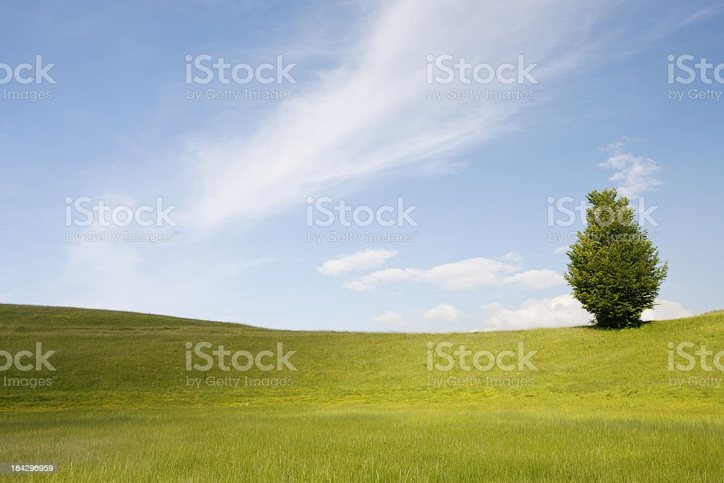 Lonely tree on green field royalty-free stock photo