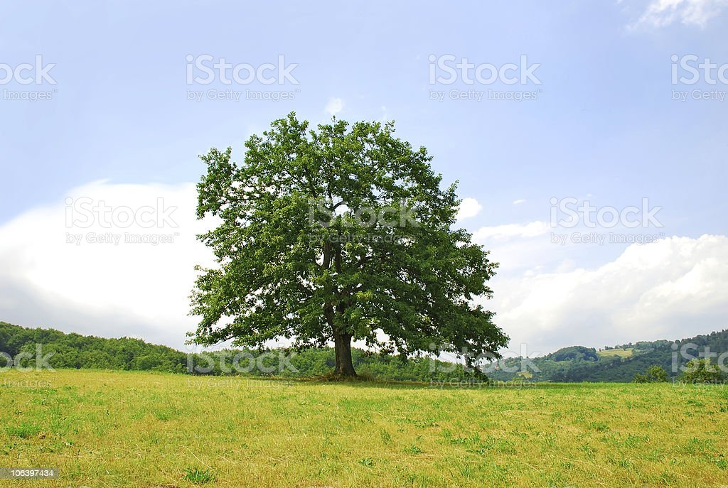Lonely tree on green hill stock photo