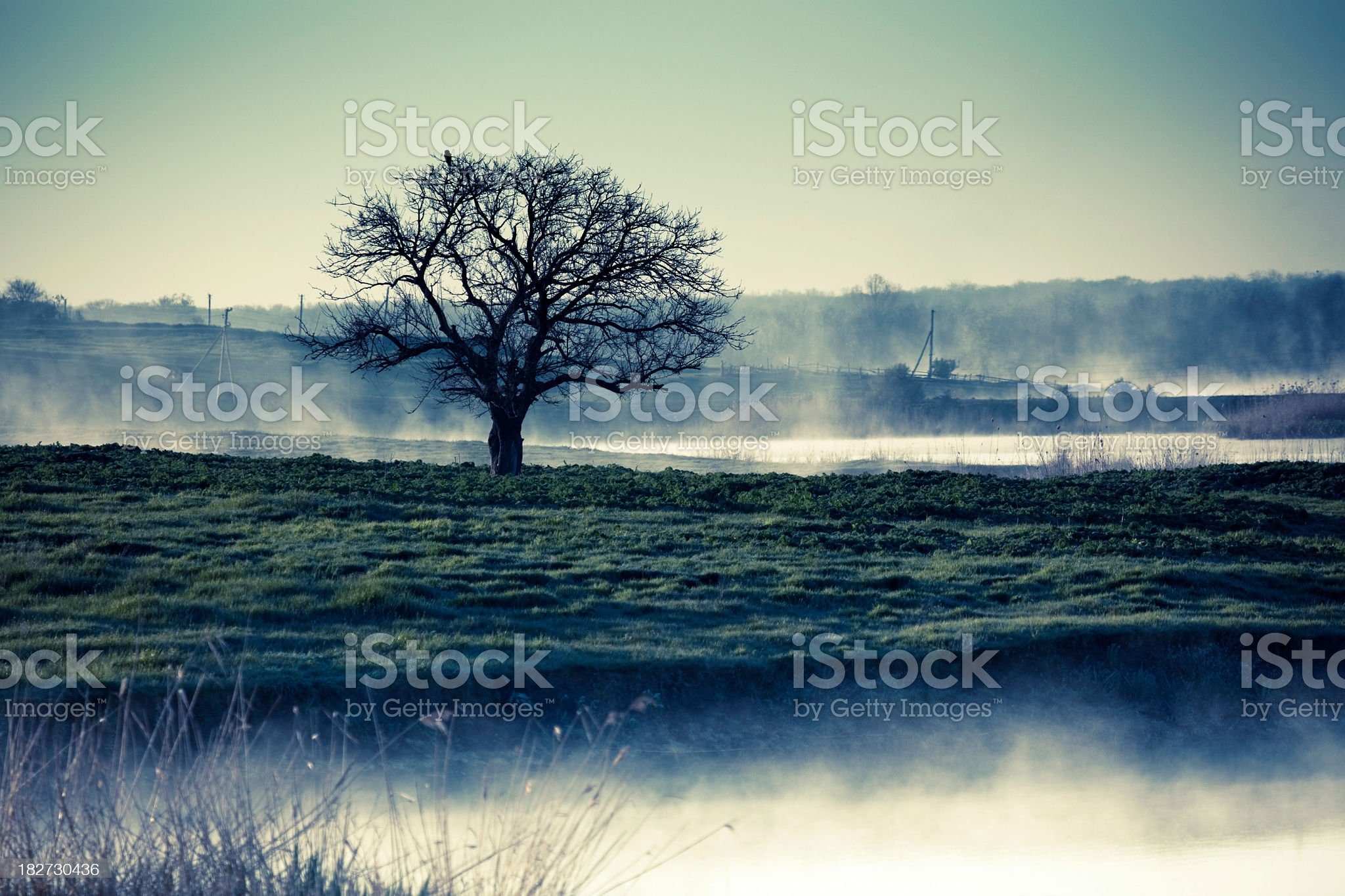 Lonely Tree on shore of misty river in morning royalty-free stock photo