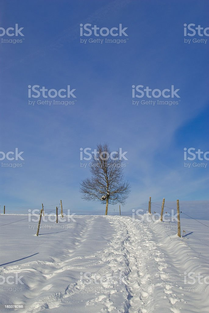 Lonely tree on the end of a winter road stock photo