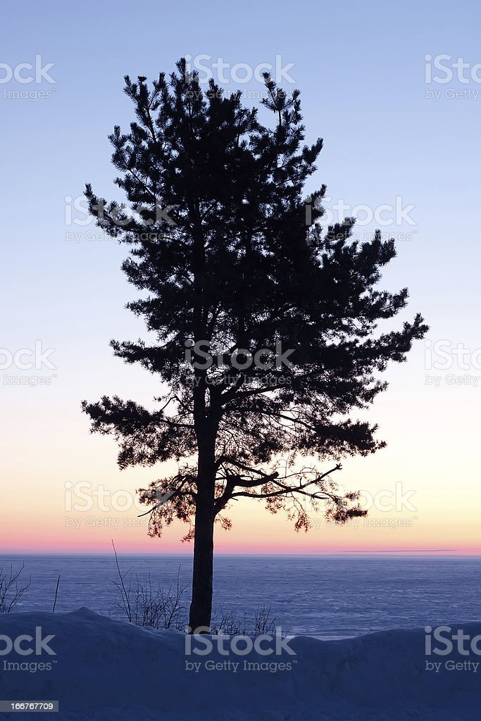 Lonely tree on the lake at dawn royalty-free stock photo