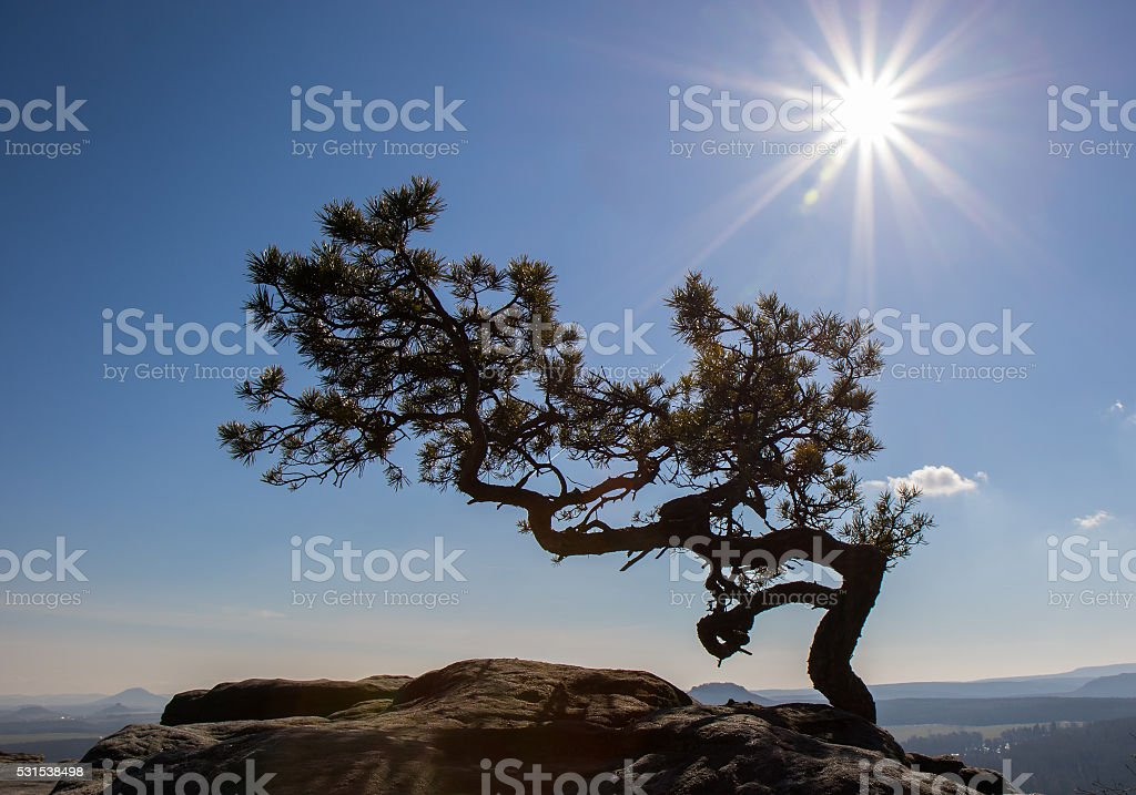 lonely tree on the mountain stock photo