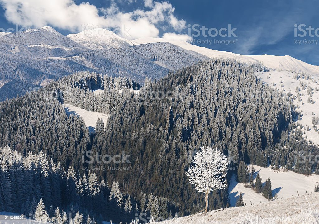 Lonely tree on the rime-covered in mountain stock photo