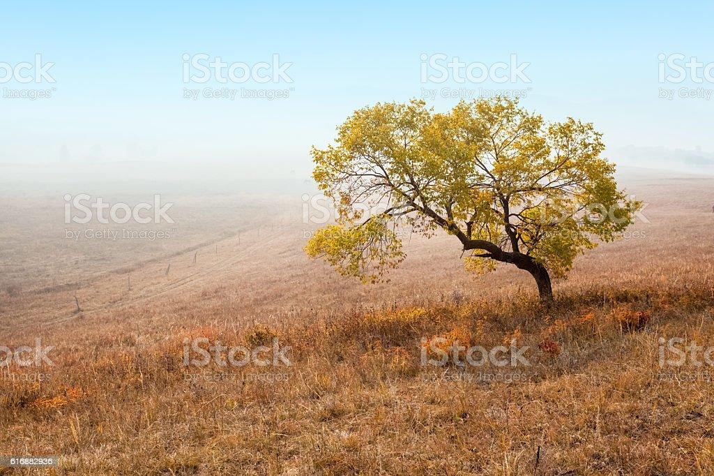 lonely tree over autumn grassland stock photo