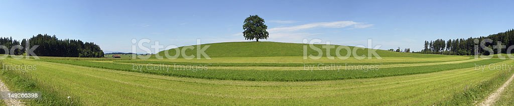 Lonely tree panorama royalty-free stock photo