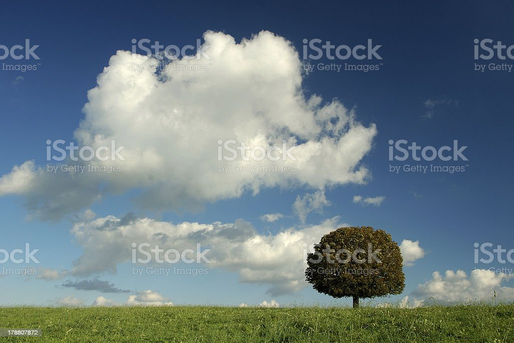 lonely tree royalty-free stock photo