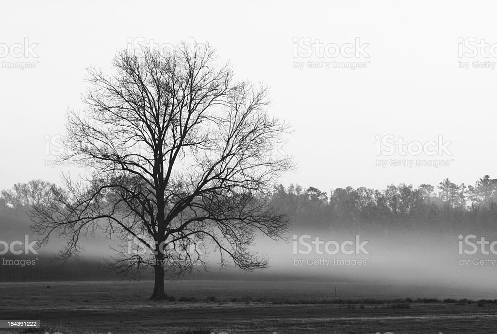 Lonely tree. royalty-free stock photo
