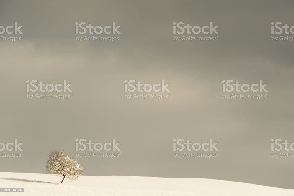 lonely tree stock photo