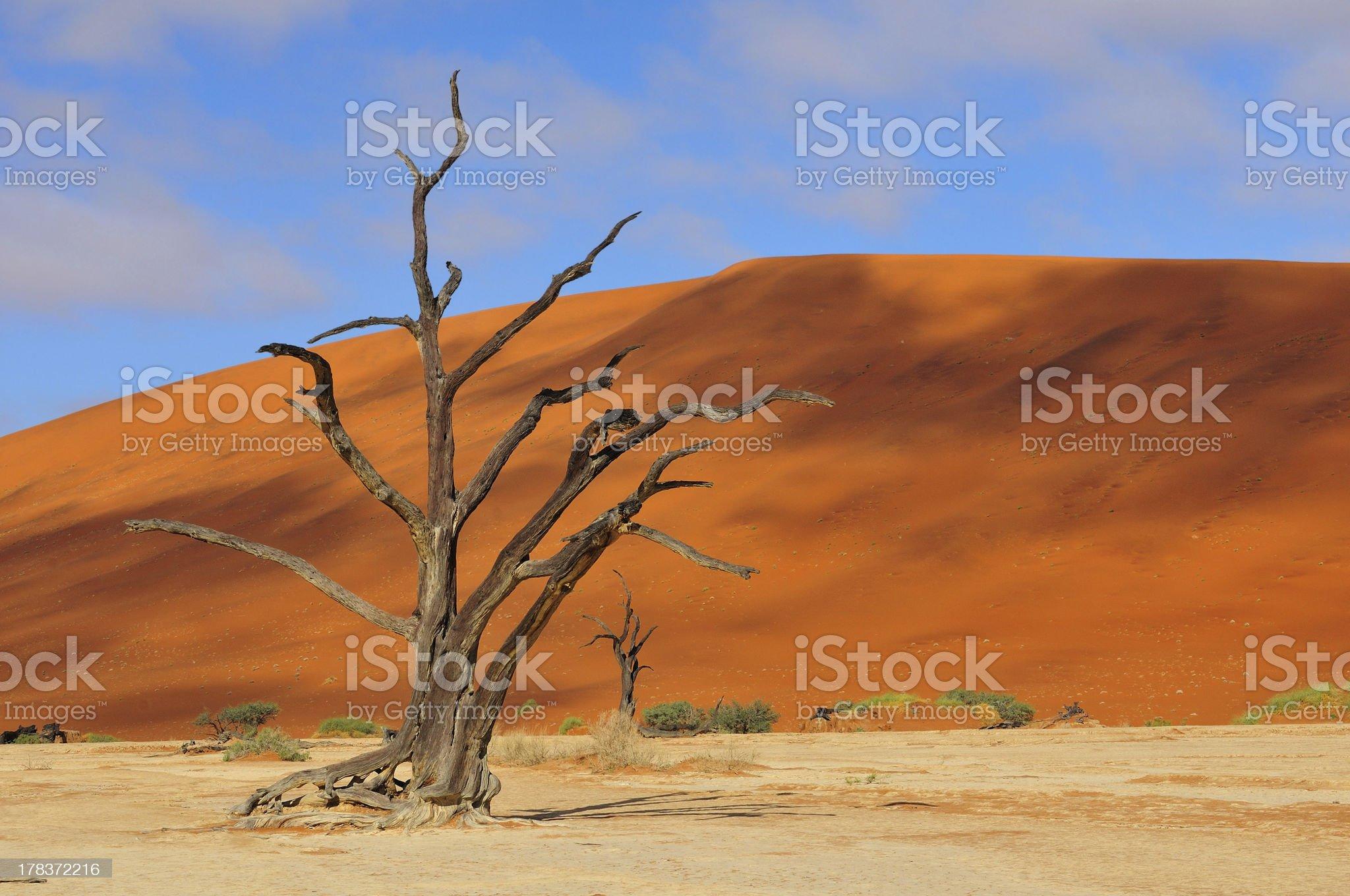 Lonely tree skeleton, Deadvlei, Namibia royalty-free stock photo