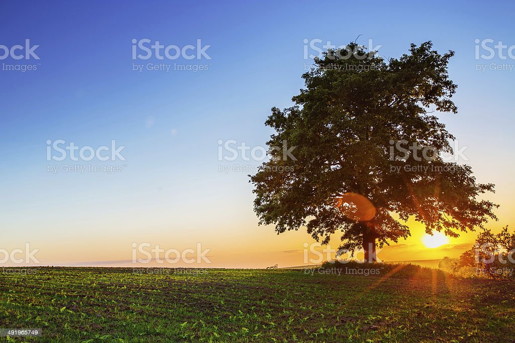 Lonely tree , sunset shot stock photo