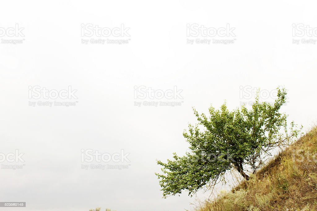 lonely tree tree, solitude, loneliness royalty-free stock photo