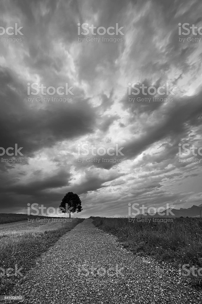 Lonely tree under the dark clouds stock photo