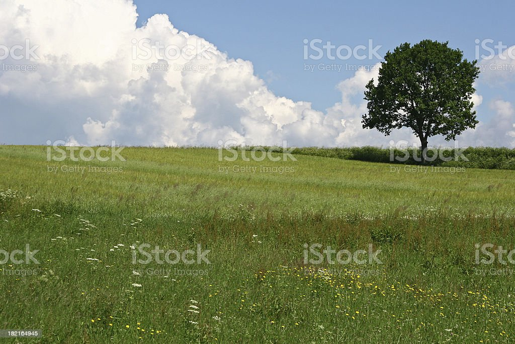 Lonely Tree with copy space stock photo