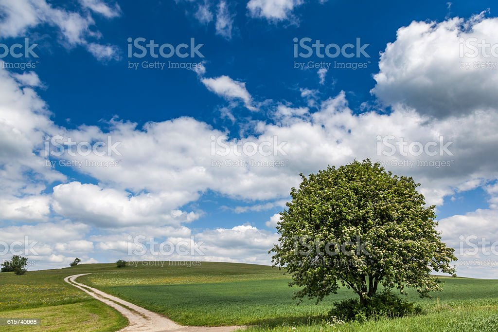 lonely tree with cross country road to horizon stock photo