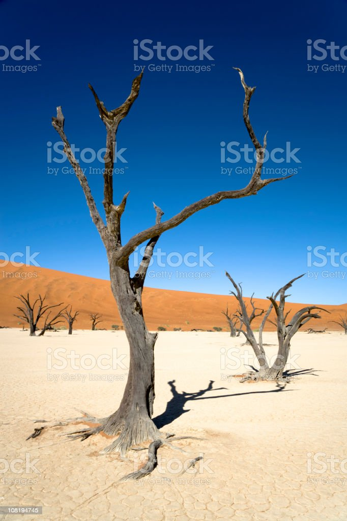 Lonely Trees Desert Landscape royalty-free stock photo