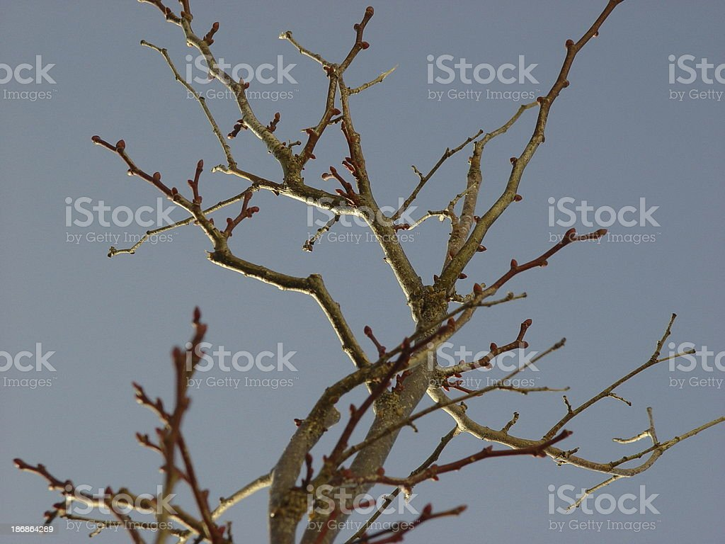 Lonely twig royalty-free stock photo