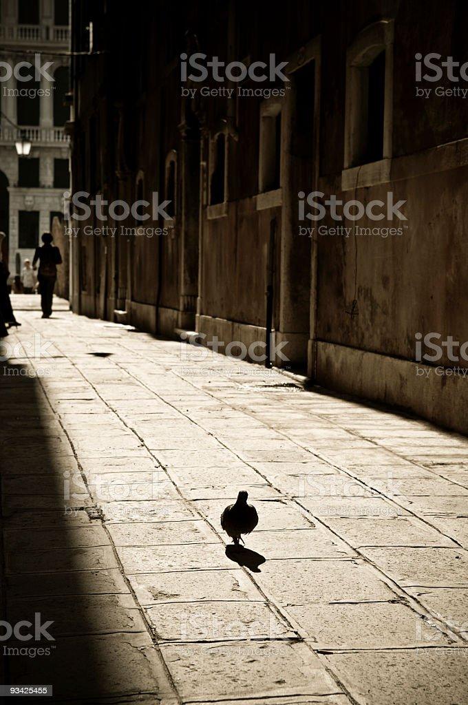 Lonely Venetian Dove royalty-free stock photo