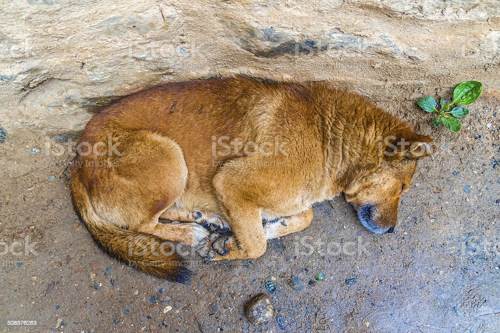 Lonely wet dog on the street royalty-free stock photo
