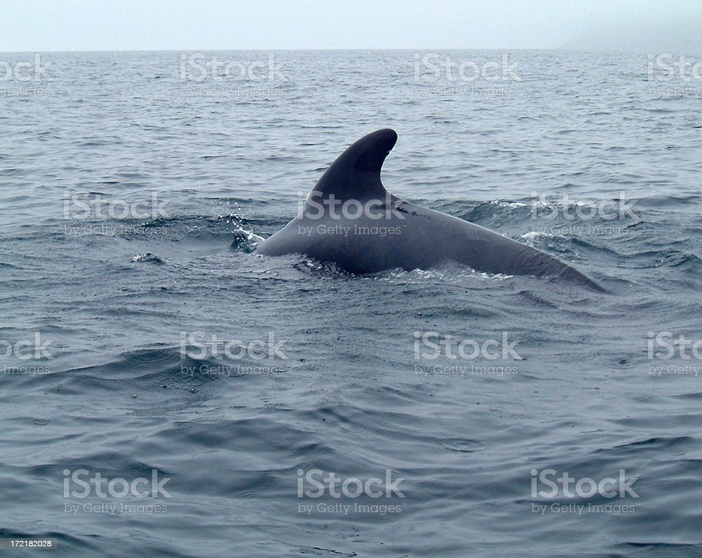 Lonely Whale stock photo