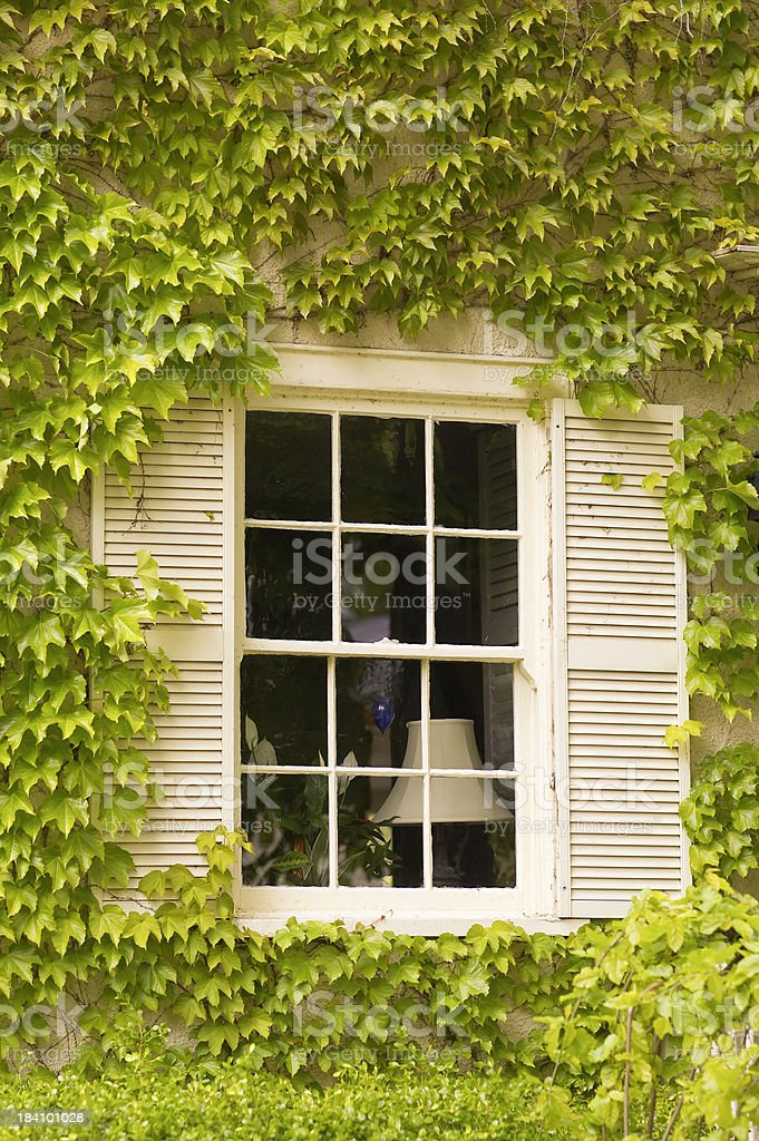 Lonely Window with vine royalty-free stock photo