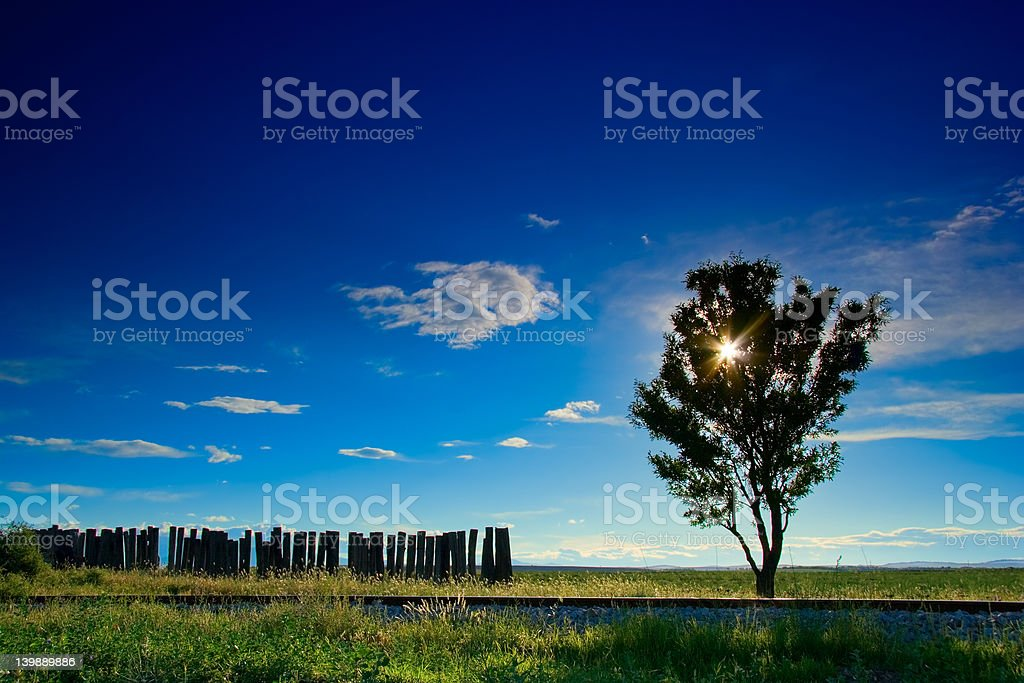 lonelytree next to a railway track royalty-free stock photo