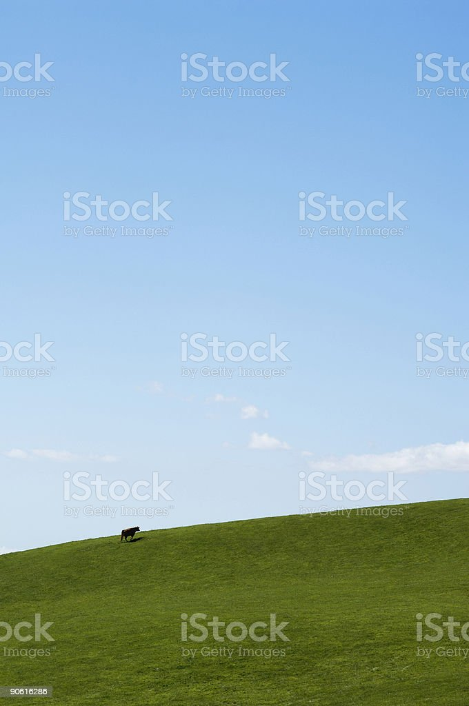 Lonesome cow on a vibrant grassy hillside stock photo