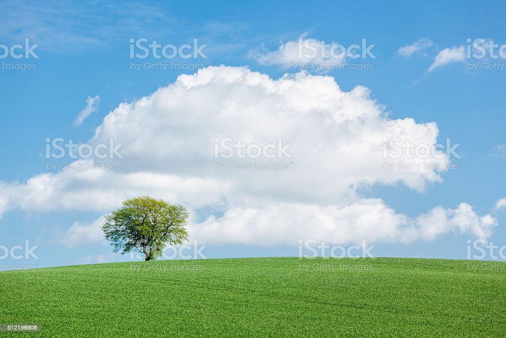 Lonesome single tree on green meadow with majestic cloudscape stock photo