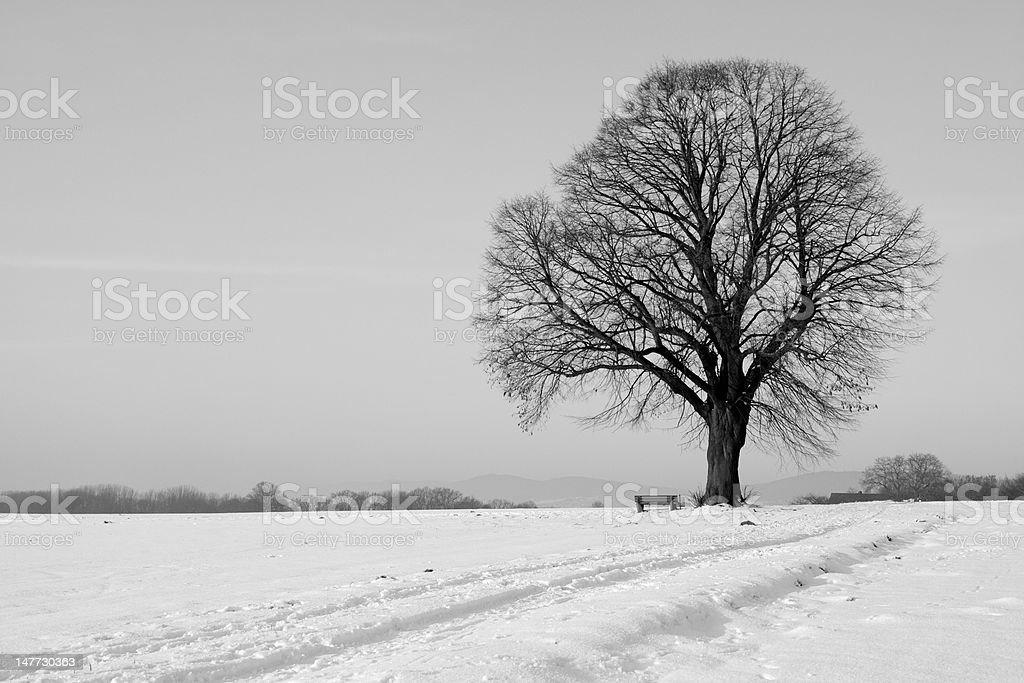 Lonesome single tree with bench on field in winter (XXXL) royalty-free stock photo
