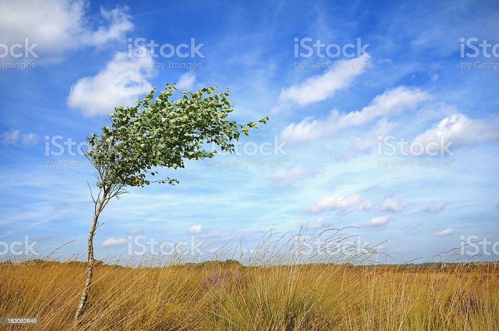 Lonesome tree in the wind stock photo