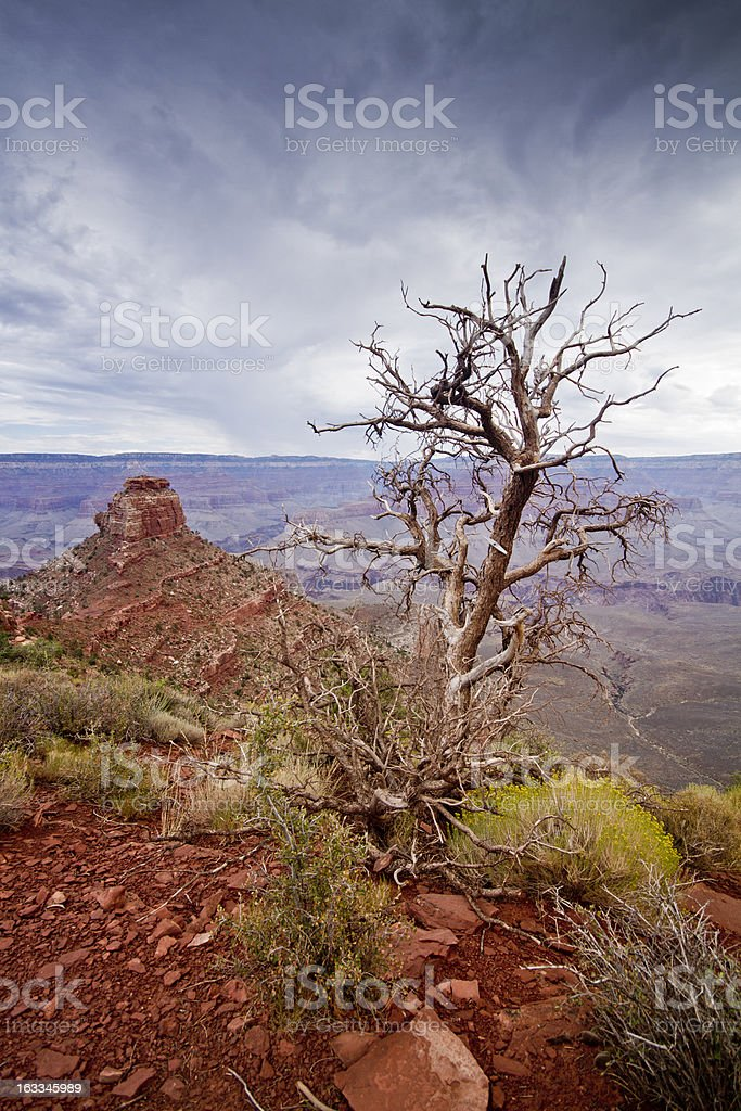 Lonesome Tree royalty-free stock photo