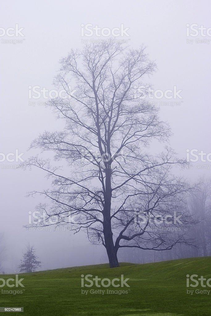 Lonesome tree stock photo