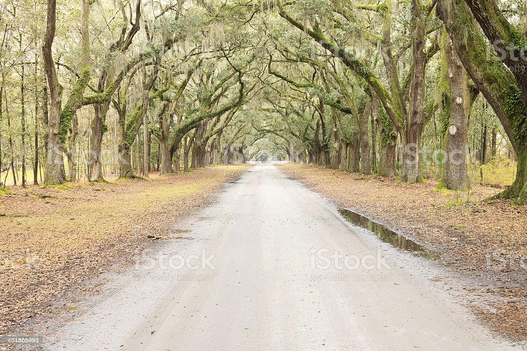 Long And Straight Tree Canopied Country Road stock photo