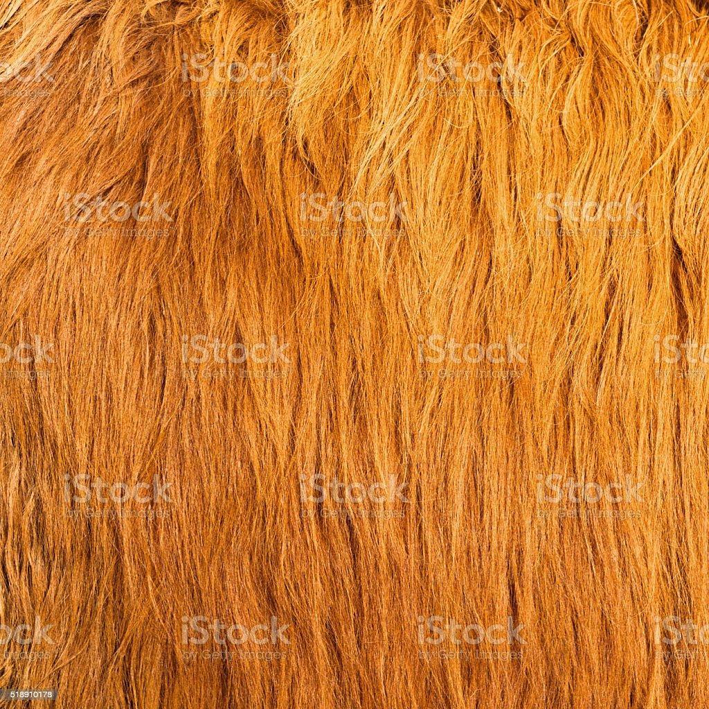 Long animal hair background stock photo