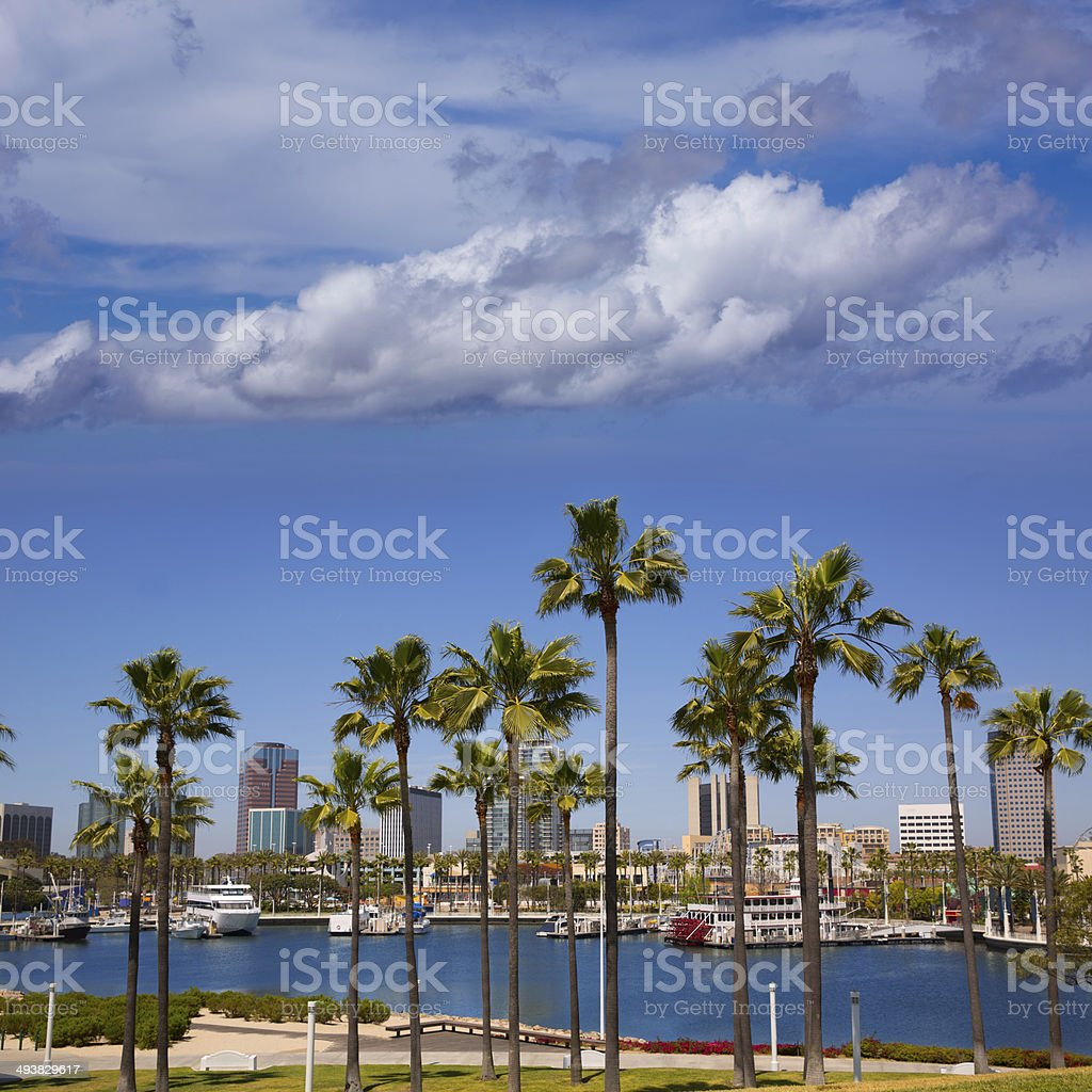 Long Beach California skyline from palm trees of port stock photo