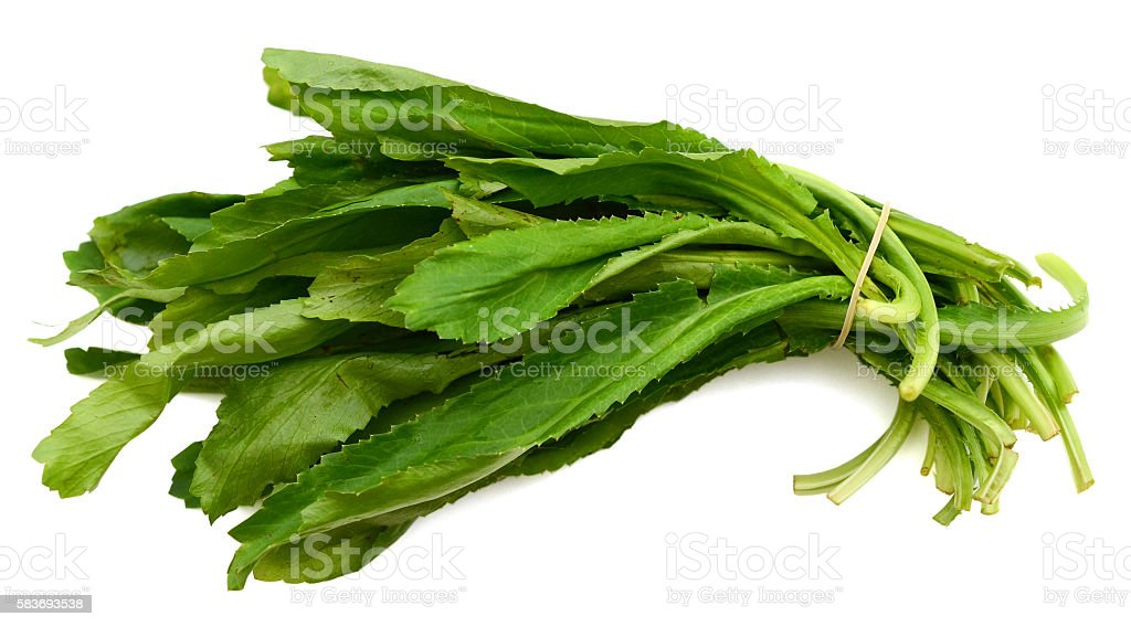 Long coriander leaves isolated on white stock photo