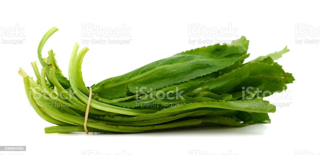 long coriander leaves stock photo