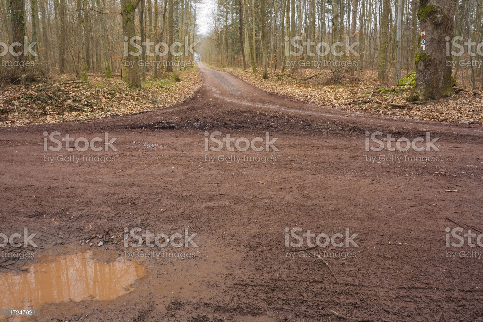 A long dirt road in the woods in autumn royalty-free stock photo