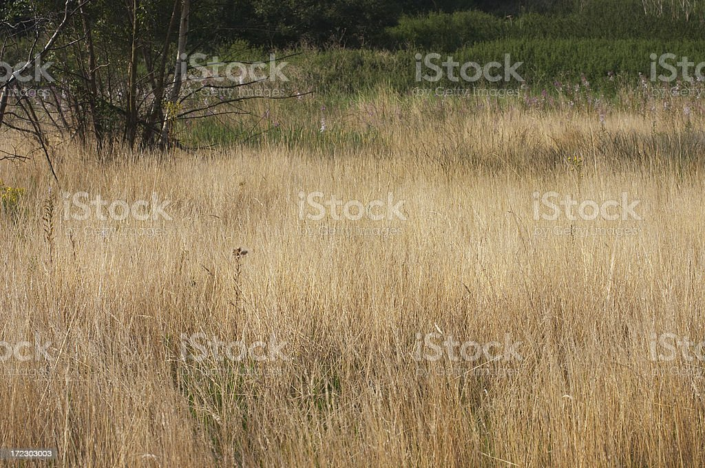 Long dry autumn grass stock photo