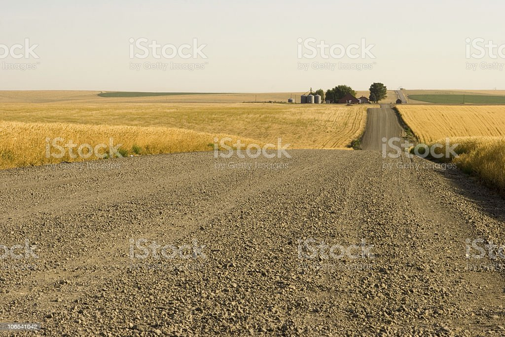 Long, empty, dirt road going through tall fields of grass  royalty-free stock photo