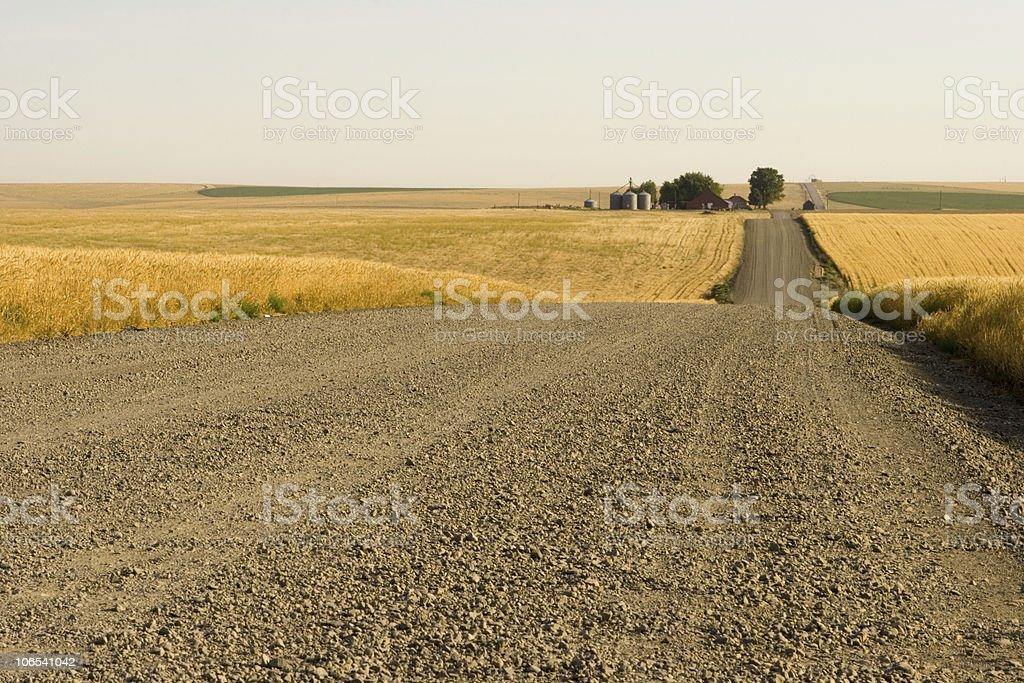 Long, empty, dirt road going through tall fields of grass  stock photo