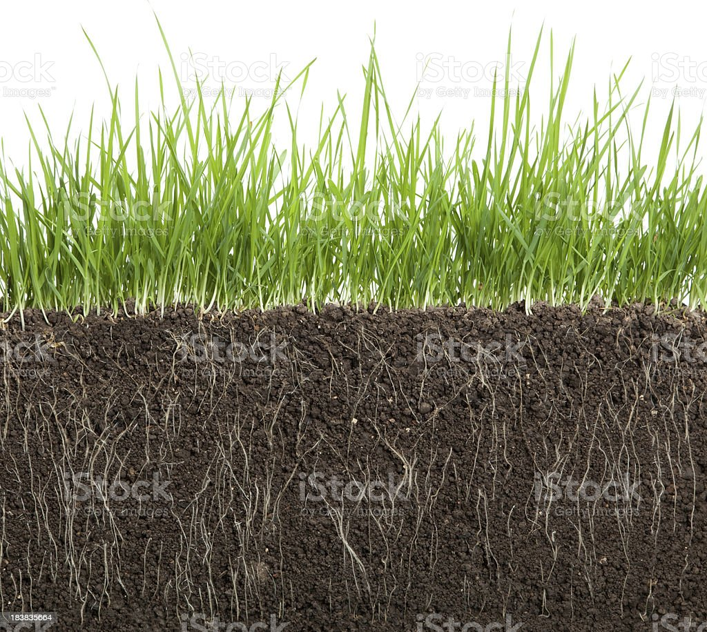 long grass and soil stock photo