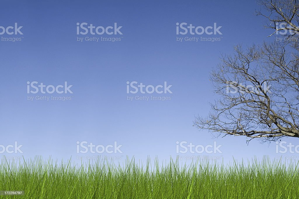 Long Grass and Tree royalty-free stock photo