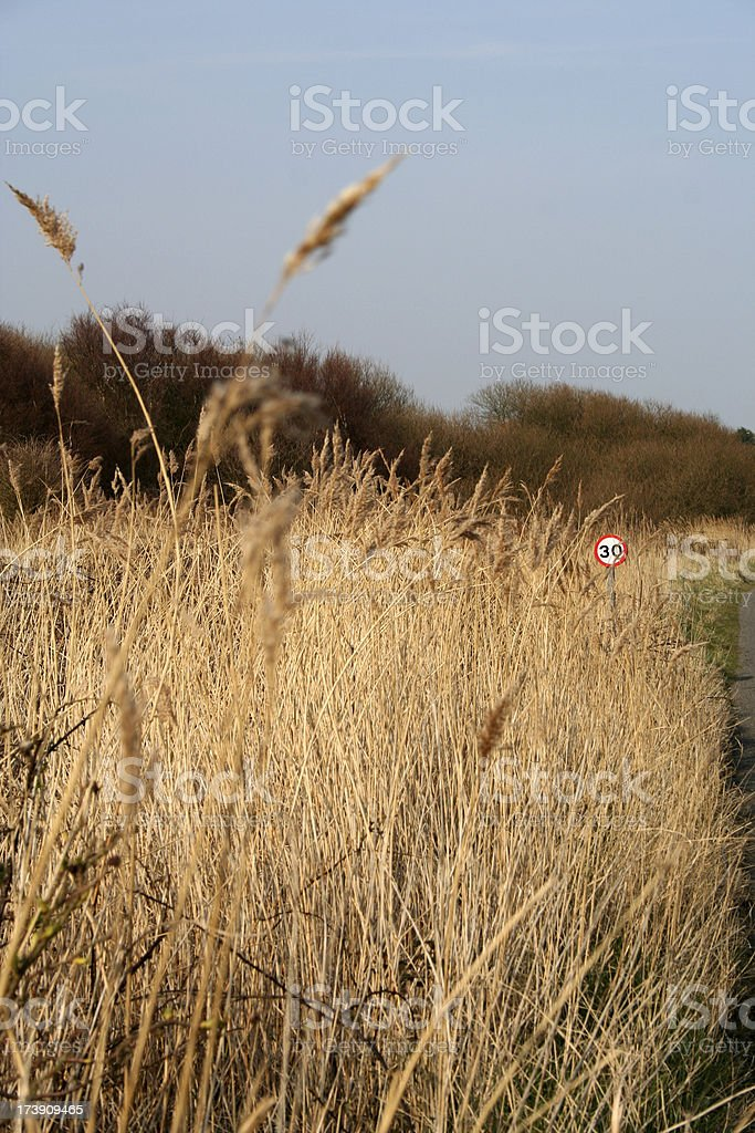 Long grass on edge of road royalty-free stock photo