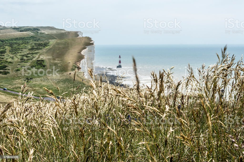 Long grass on the Sussex Heritage Coast stock photo