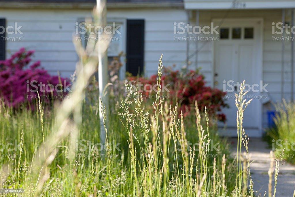 Long Grass Outside Abandoned Cape Cod Single Family Home Maryland stock photo