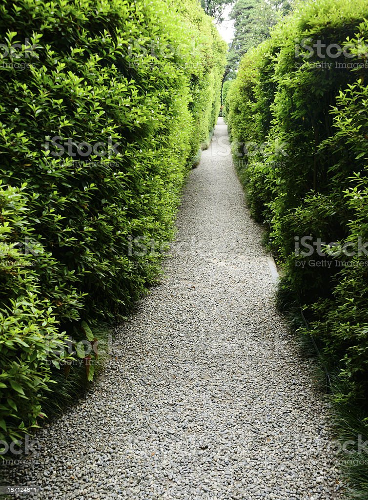 Long gravel path bordered by tall evergreen hedges. -XXXL royalty-free stock photo